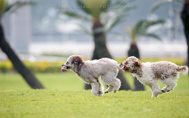 Dog Chaser