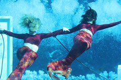 swimming, recreation, outdoor recreation, underwater sports, water sport, freediving,