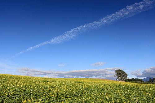 秋の雲と哲学の木