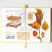 Herbarium_workshop by Anna Rastorgueva