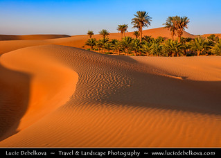 United Arab Emirates - UAE - Al Ain desert oases with palm trees