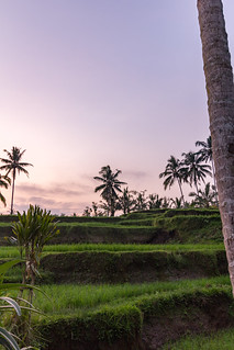 Ubud and it's countryside.