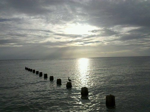ocean sunset sun bird beach water clouds florida stumps clearwater gumm