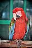 Isfahan : Birds Garden  - اصفهان : باغ پرندگان