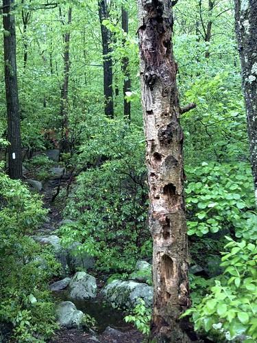 newyork nature hiking appalachiantrail