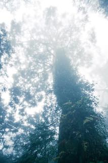 又是一棵很高的樹-1226.jpg