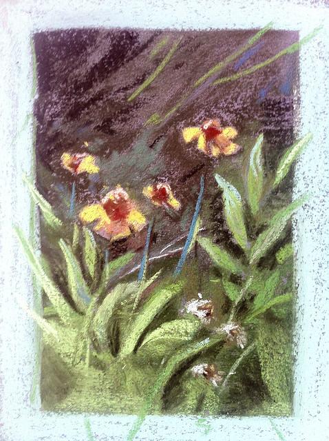Lundman_wildflowerstudy1