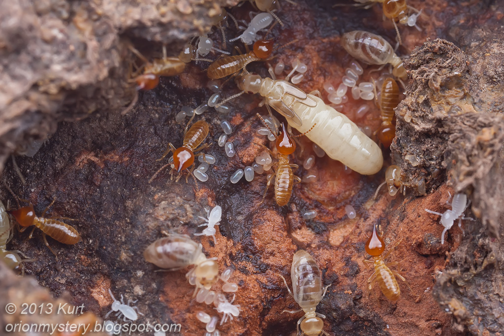 Termites Colony Amp Gecko Photography Forum