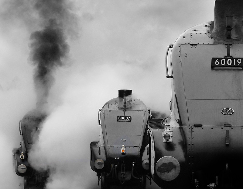 A4 Locomotives all lined up.