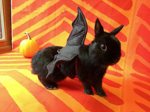 George Bat Bunny by Jeni Baker
