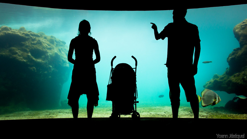 Silhouettes aquarium