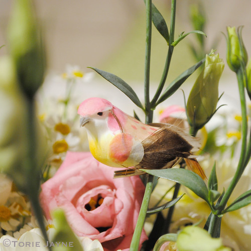 Pretty floral bird @Laura Ashley press show