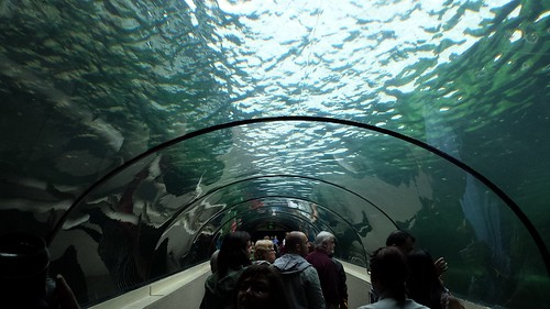 Sydney Sea Life Aquarium