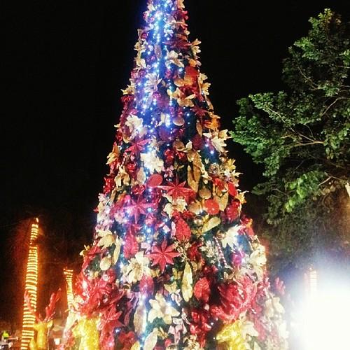 Árvore de natal caprichada!
