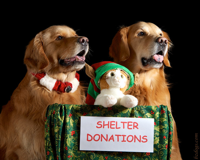 Shelter Donations