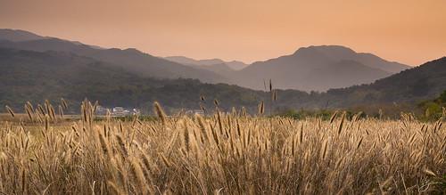 sunset yellow canon landscape hongkong 5dmarkii