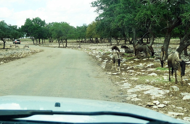 wildlife-ranch-road