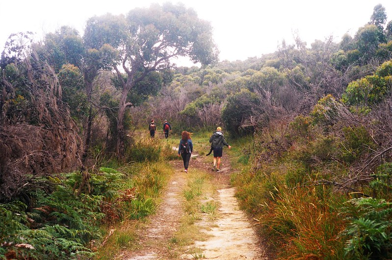 Bush walk in Tasmania