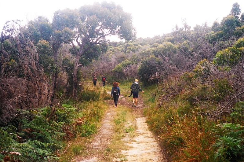 Bush walk in Tasmania