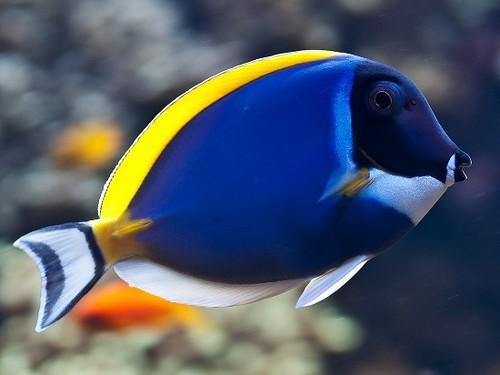 Fotografia em palavras: Vida aquática