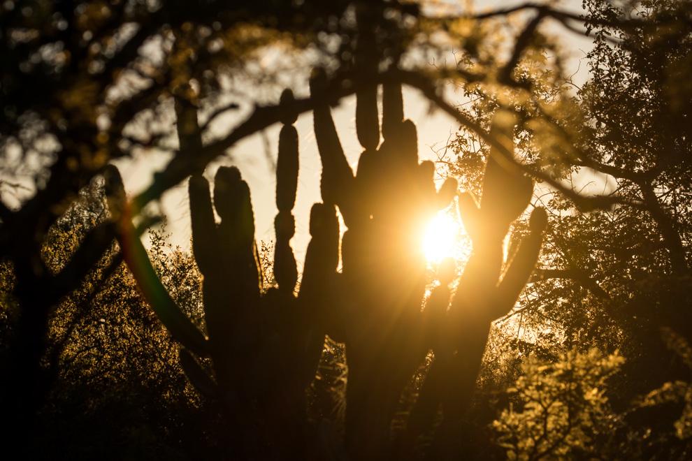Un cálido atardecer puede verse en cualquier parte del territorio chaqueño, los rayos del sol se filtran por las ramas de los arbustos bajos situándonos en un ambiente tranquilo, silencioso y relajante. (Tetsu Espósito)