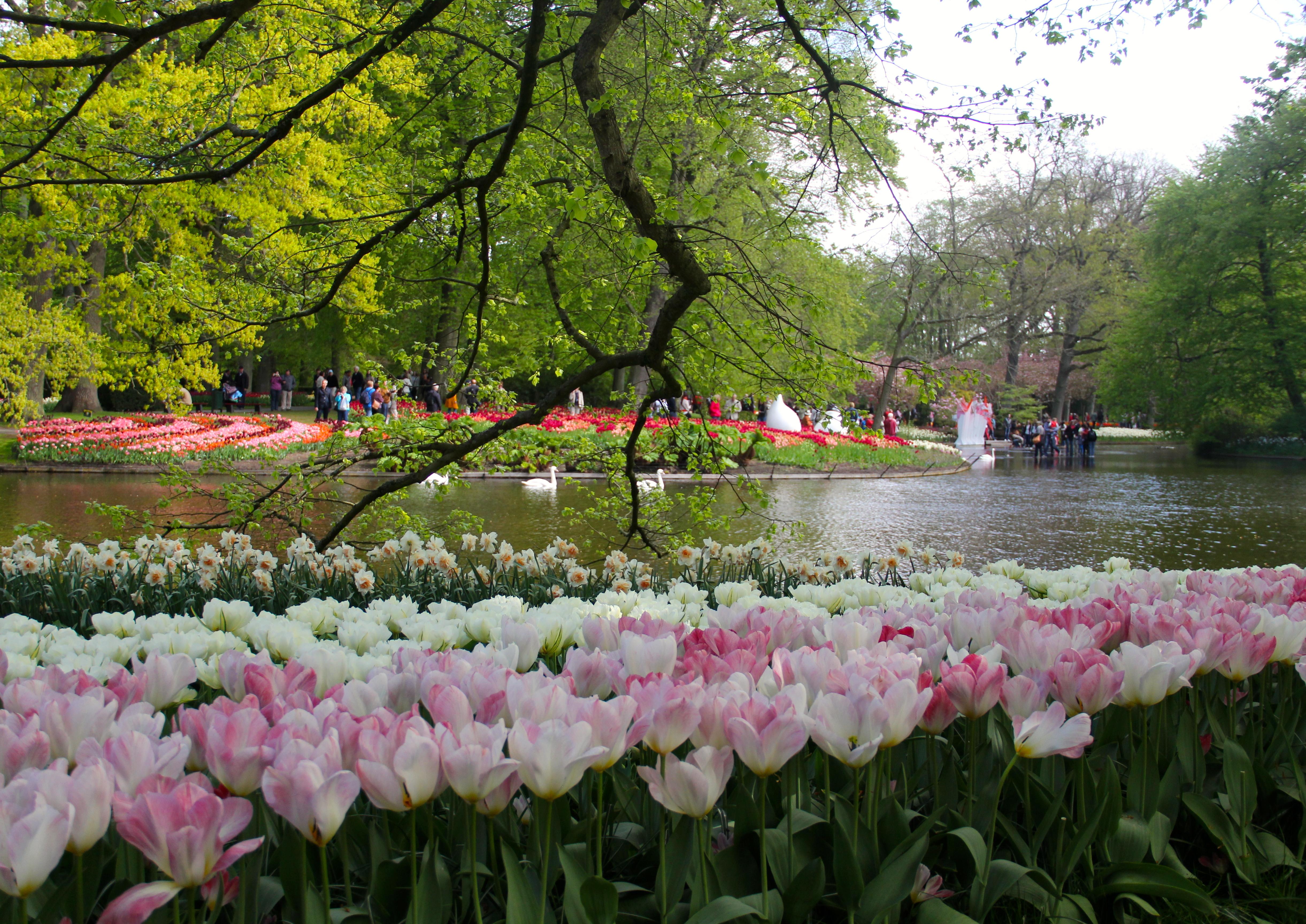 Keukenhof o maior jardim de tulipas do mundo fica na for Esplanada dos jardins 1