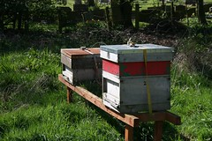 pollinator(0.0), backyard(0.0), invertebrate(0.0), insect(0.0), membrane-winged insect(0.0), beekeeper(0.0), bee(0.0), apiary(1.0), beehive(1.0),
