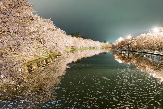 弘前公園 西堀の夜桜