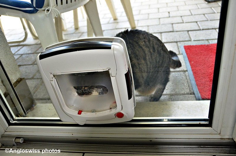 Tabby at the cat flap