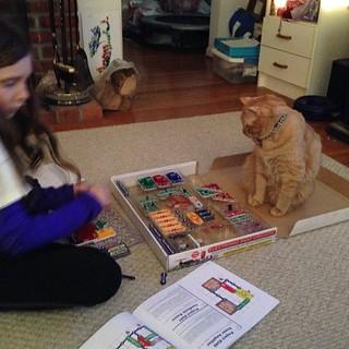 Electronics project #catsofinstagram #cats #foodcatspens