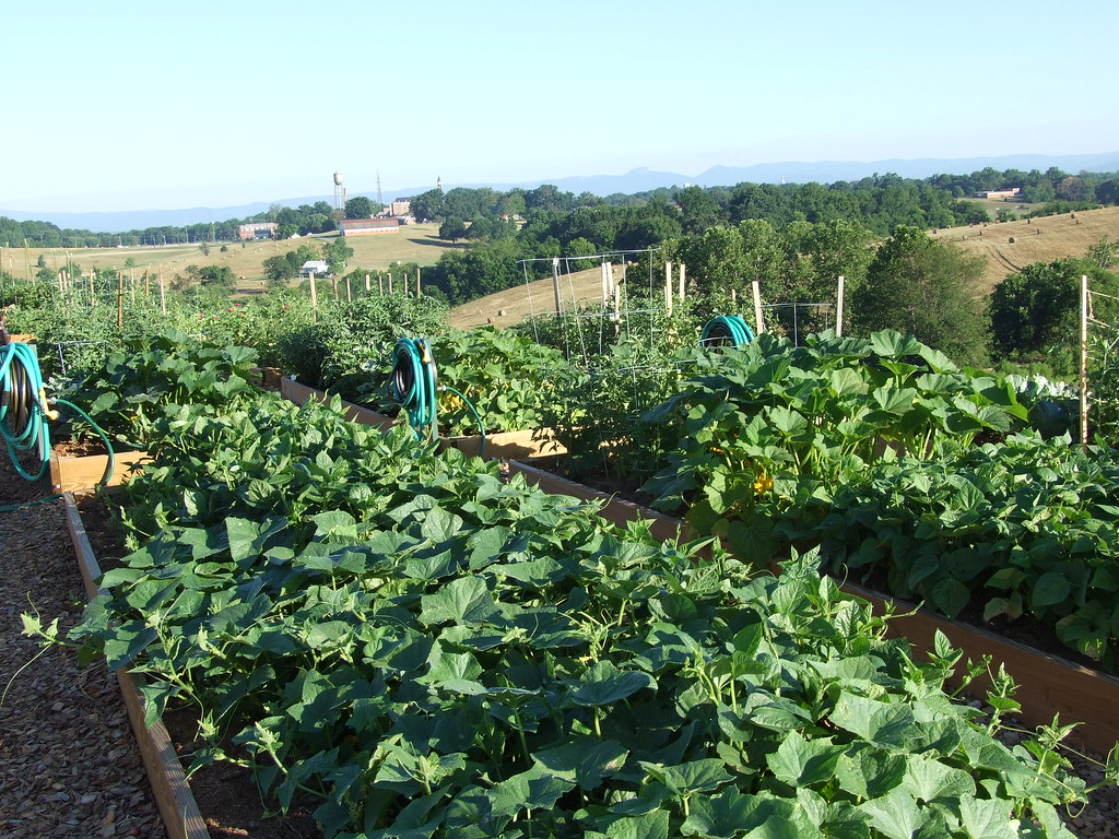 Com. Gdn. crops-Donna Teasley-CC-BY-SA.jpg