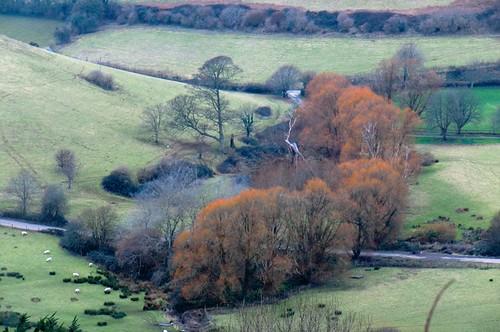 Dorset willows, Feb 2015