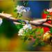 Spring colors V by Damaz Real Fantasy