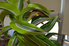 Plant Macros