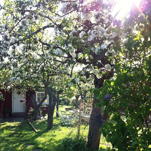 Tar en omväg genom #kolonin. Blåklinten blommar redan!