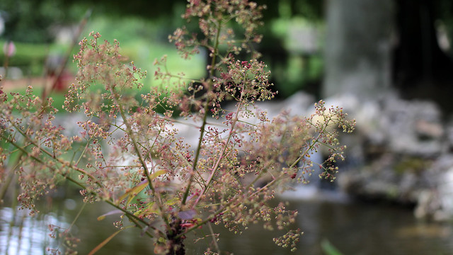 Le Jardin des Plumes