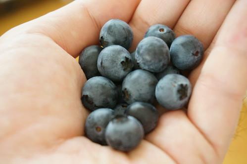 ブルーベリーの収穫_DSC04852