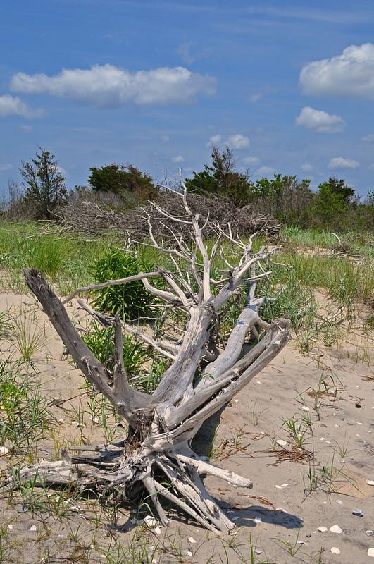 Cedar Island (10)