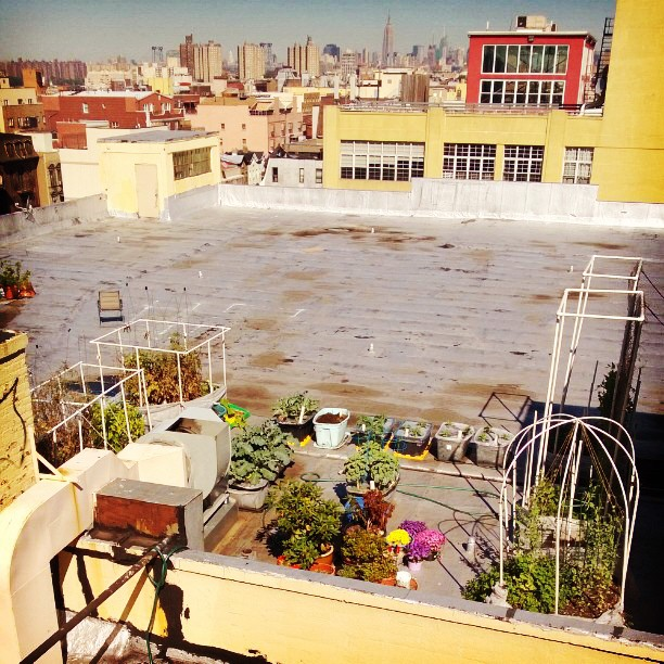 Our garden looks so tiny in this big city.  #garden #brooklyn #nyc