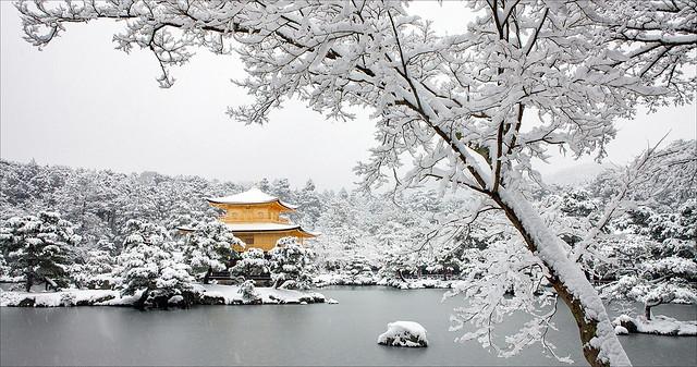 A Golden Winter