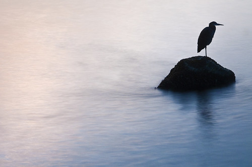 Bird on Water by petetaylor