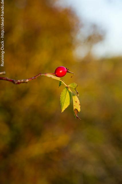 Herbstfrucht