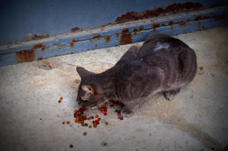 Stray-Cats-Istanbul-(13)