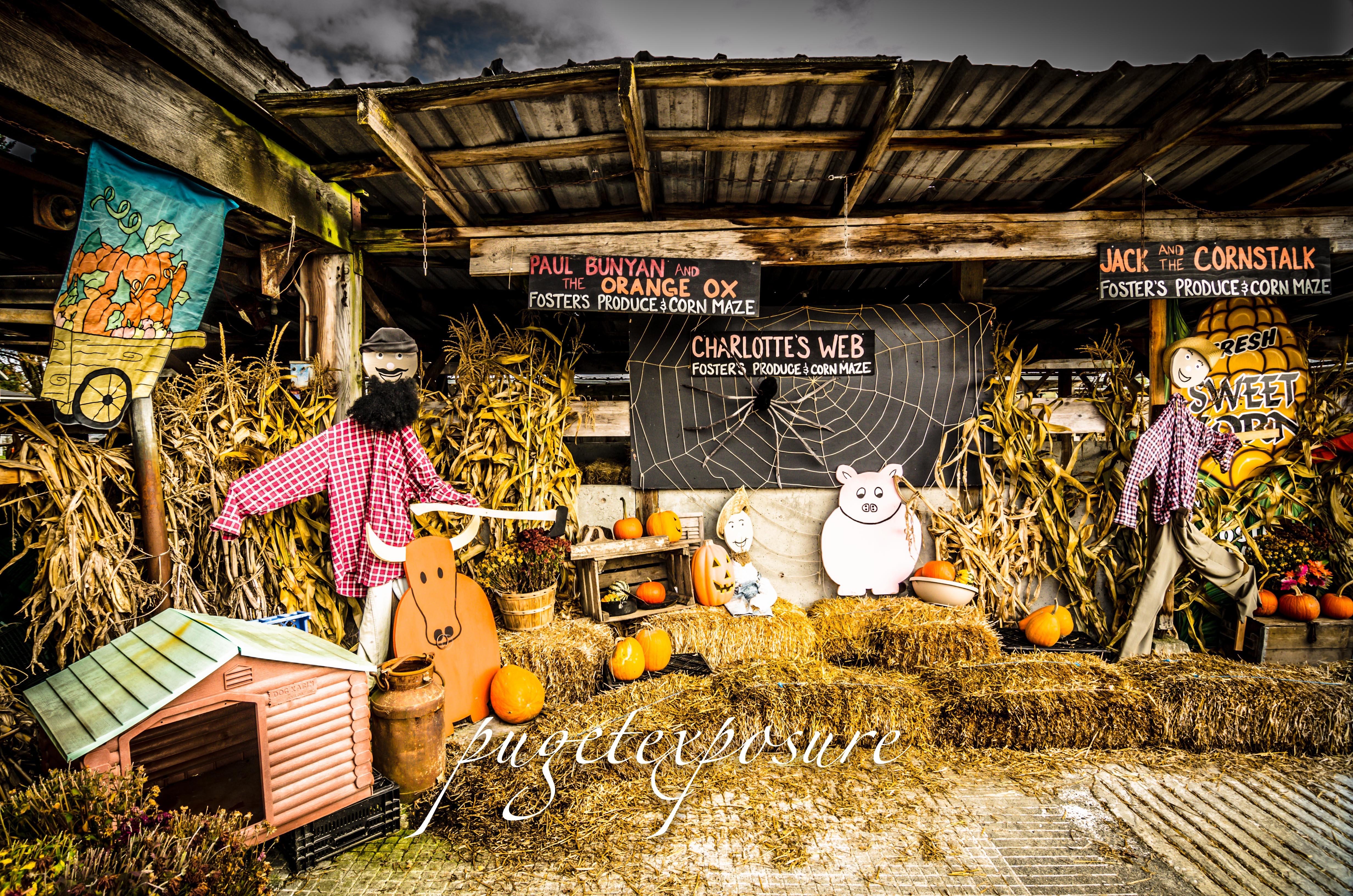 Pumpkin scenese