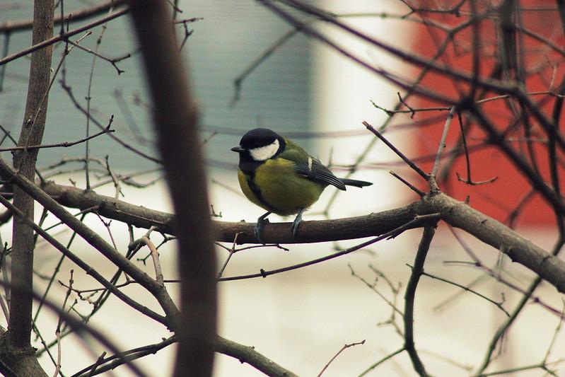 birds 029