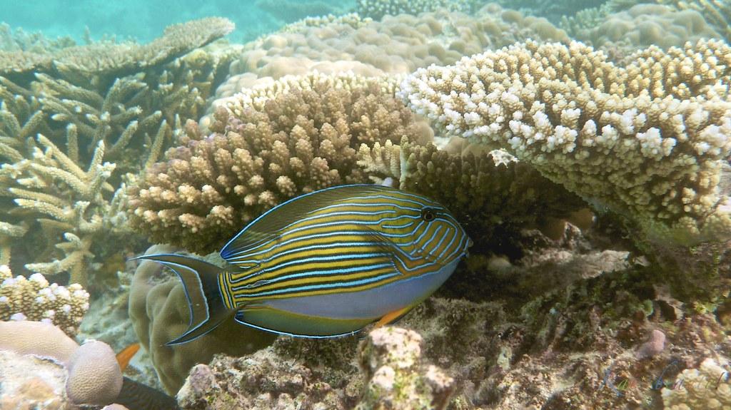Maldives 057