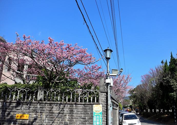 2 平菁街42巷櫻花