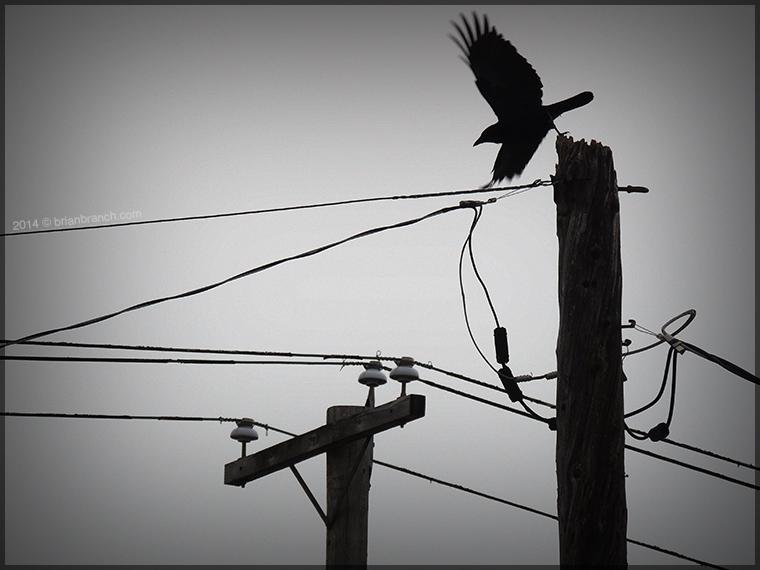 DSCN6070_crow