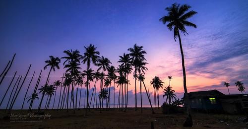 sunrise coconuttrees singleexposure sifoocom nikond800e nurismailphotography nurismailmohammed nurismail