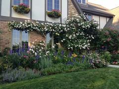 Lucas Garden